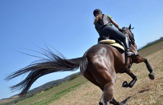 gallop_shutterstock_101289706peqBajRes-570x370