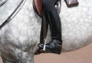 horse-241957_1280-1024x684